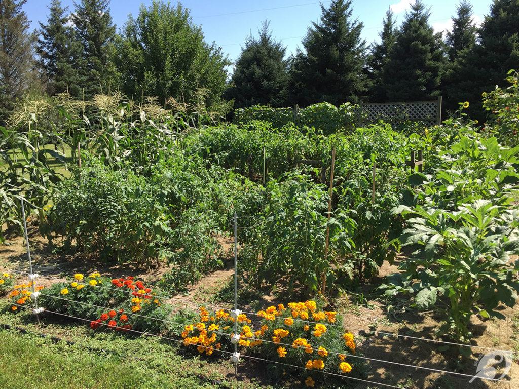 My busy little garden